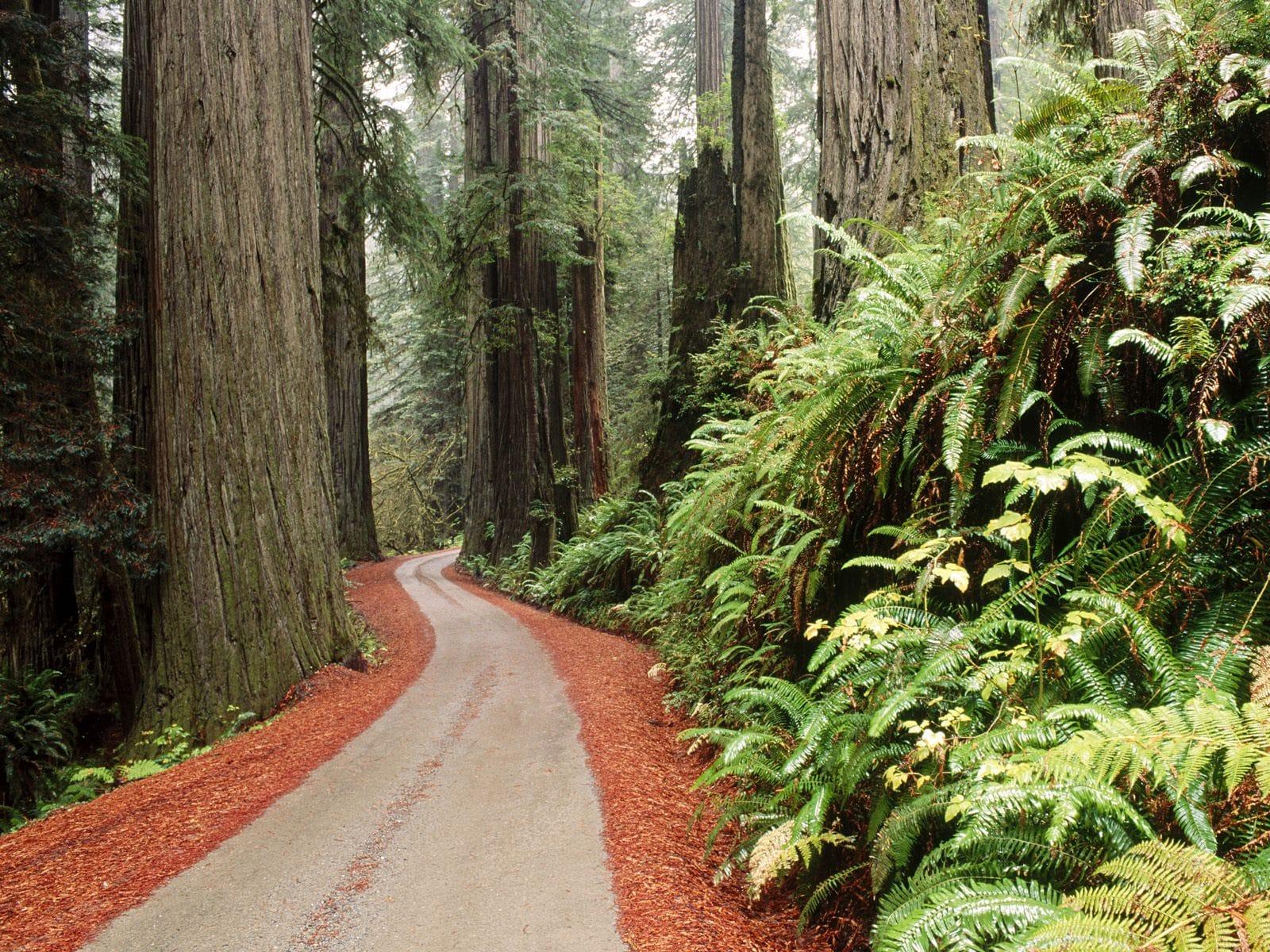 Potecile înguste din Parcul Naţional Redwood sunt perfecte pentru a fi explorate