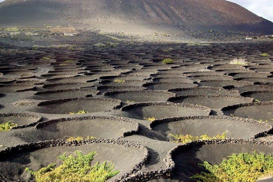 Pe relieful vulcanic se cultivă viţa de vie