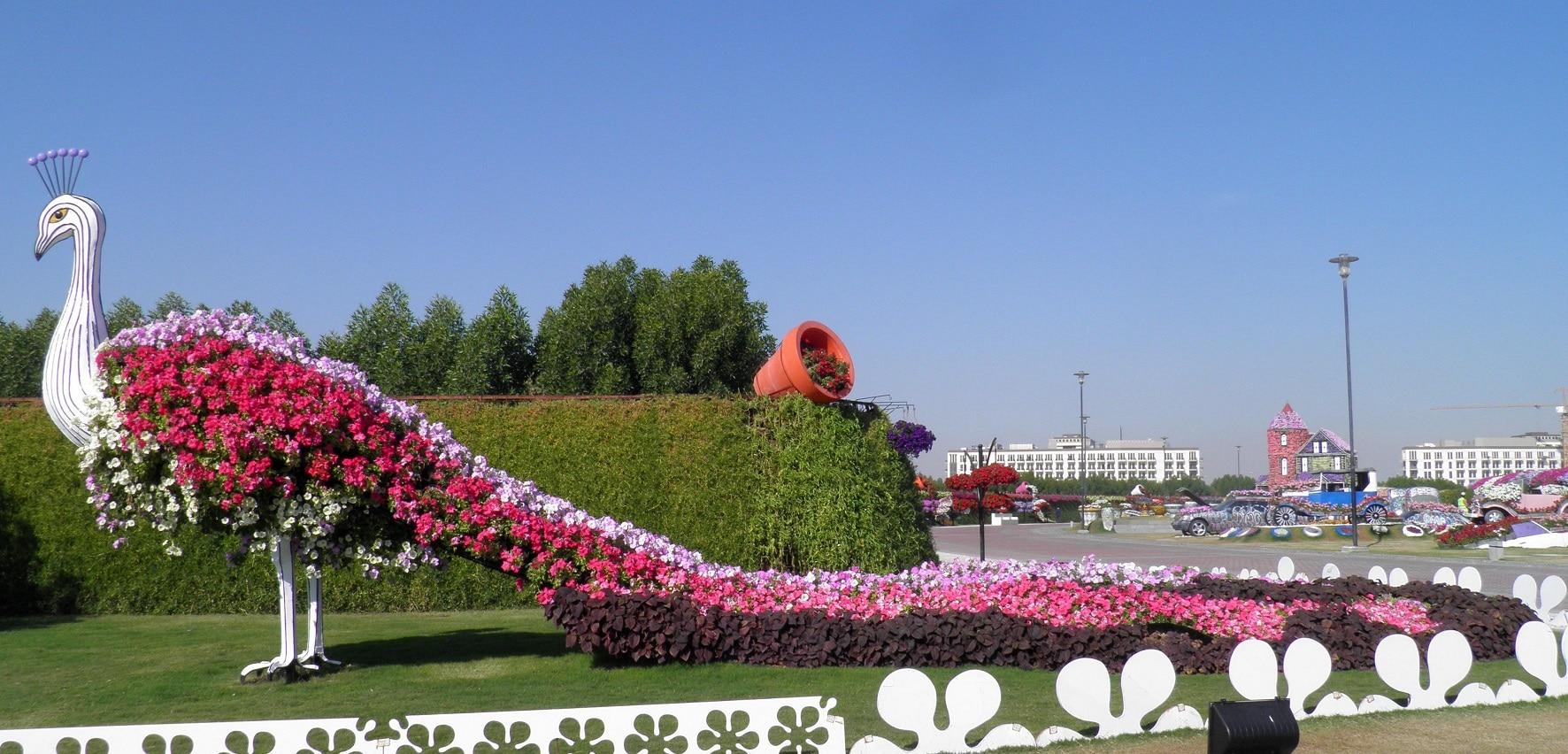 Păun din flori din Dubai Miracle Garden
