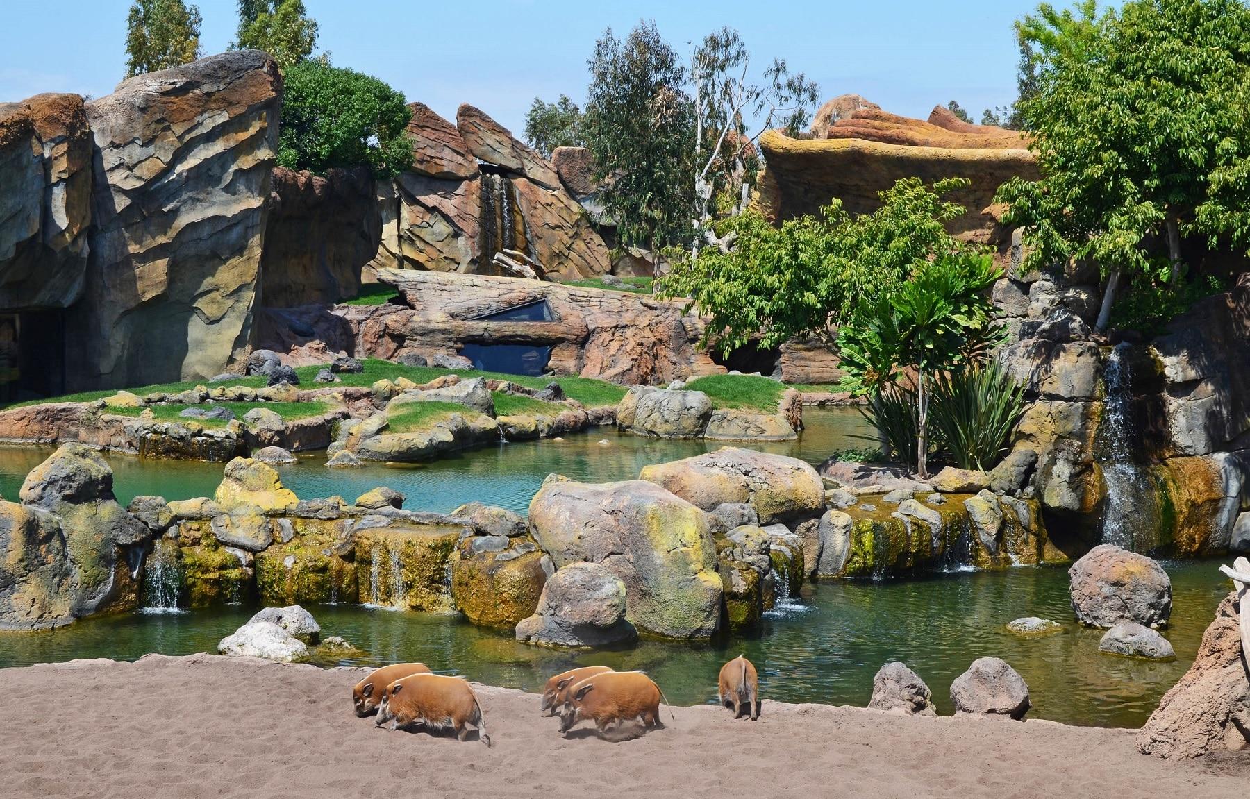 Specii de animale din Valencia Parc