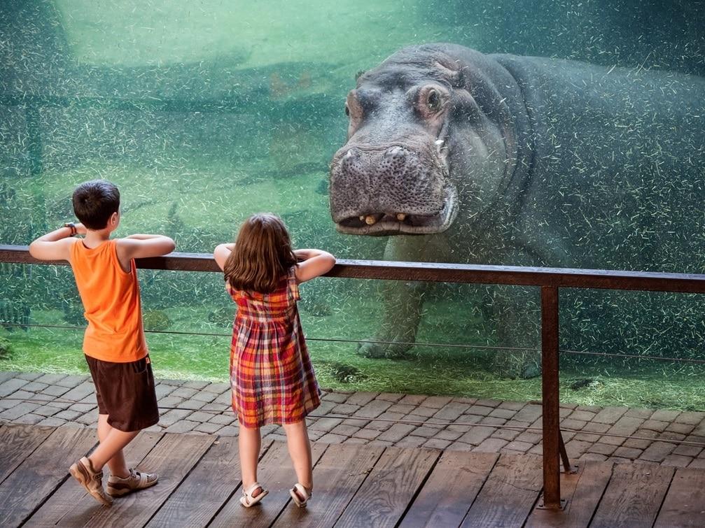 Copii fascinați de hipopotamii din grădina zoologică Valencia