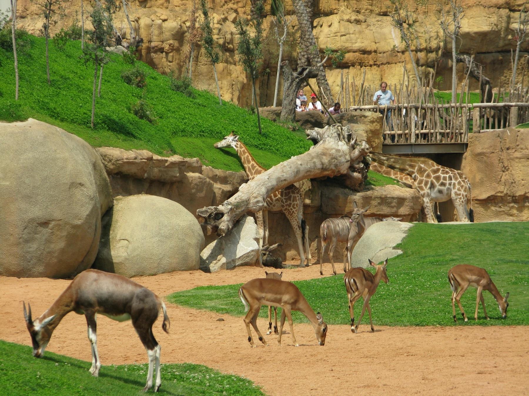 Decorul exotic în care trăiesc animalele din Valencia Bioparc