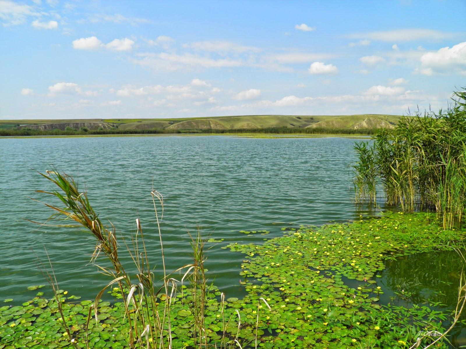 Vegetaţia bogată este mediul propice pentru dezvoltarea unui număr mare de specii de păsări