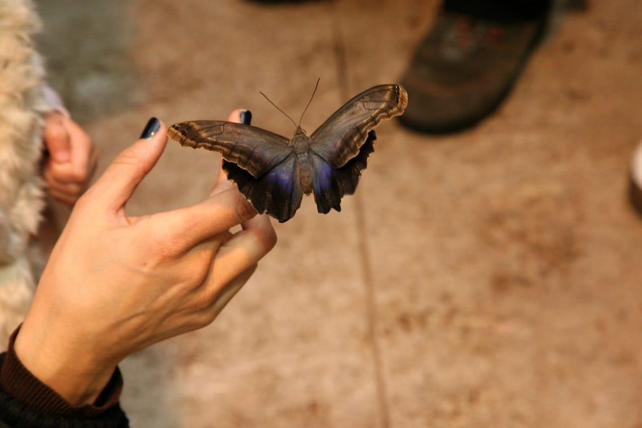Fluture ce se bucură de vizitatori