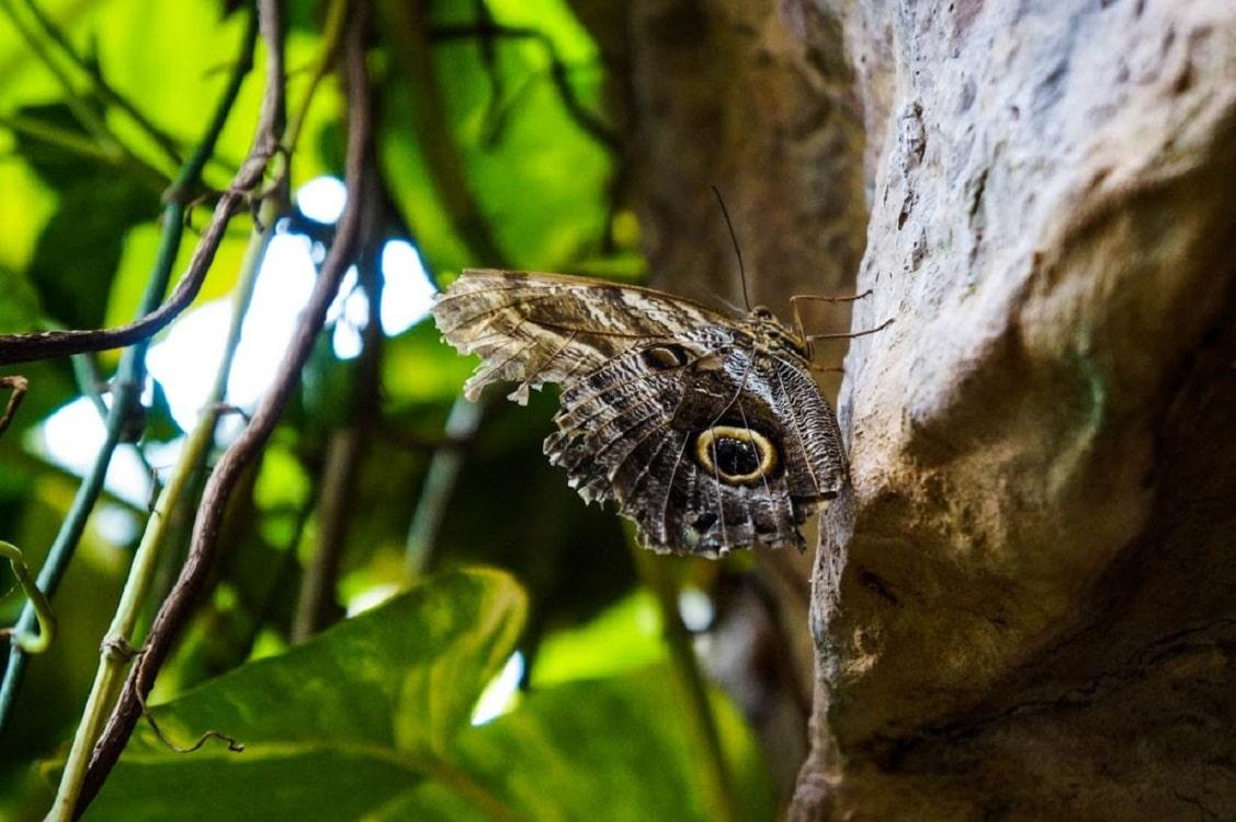 Fluture în natură -  Casa Fluturilor