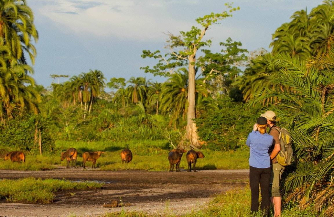 Imagini dintr-o rezervație naturală din Congo